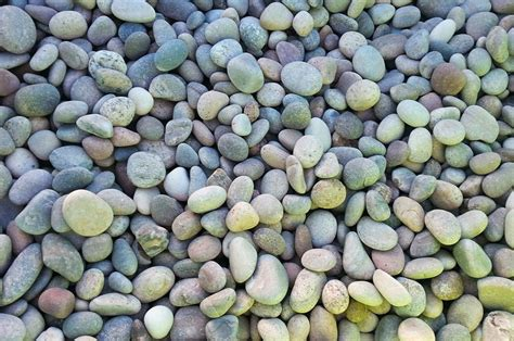 backyard pebble gravel pebbles images reverse search