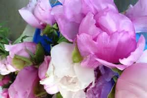 peonies season australian peony rose season opens abc rural australian