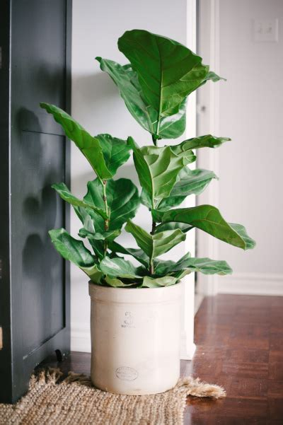 easy apartment plants lacking a green thumb but need some of the great outdoors