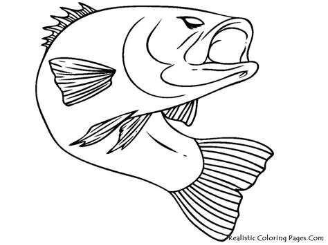 easy coloring pages of fish bass fish realistic coloring pages coloring pages