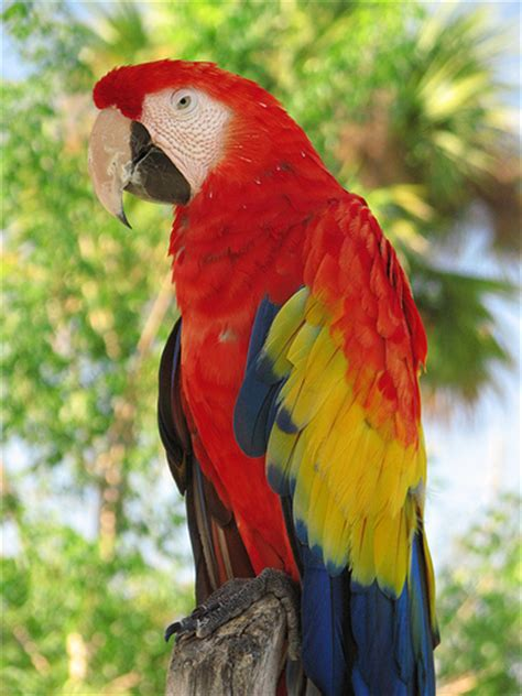 Style Of Home Adobe by Colorful Tropical Bird At Lion Country Safari In Florida