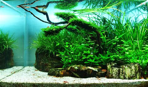 Most Beautiful Aquascapes by Top 10 Most Beautiful Freshwater Aquariums Of 2012