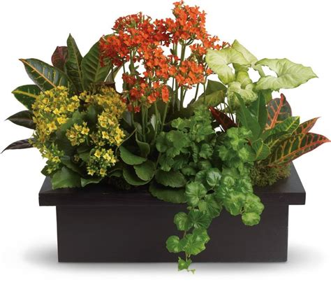 indoor plant arrangements 94 best container gardens images on pinterest potted