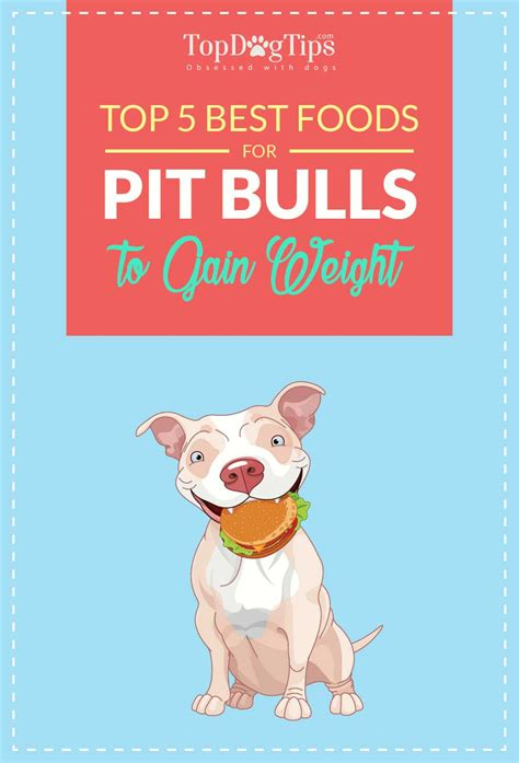 best food to feed a pitbull puppy best food for pitbulls to gain recipes food