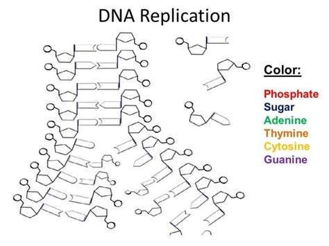 Dna The Helix Coloring Worksheet Answers