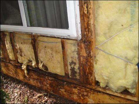 buying a house with termites buying a home with termite damage should i buy a house with termite damage