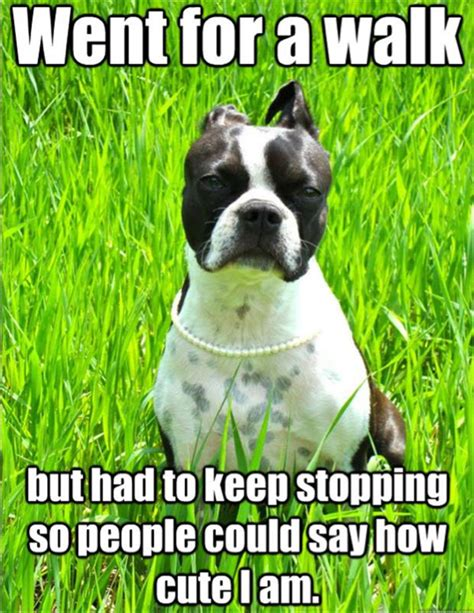 Dog Problems Meme - first world dog problems meme 19 dump a day