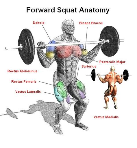 what muscles does benching work front squat the front squat is a compound exercise that is