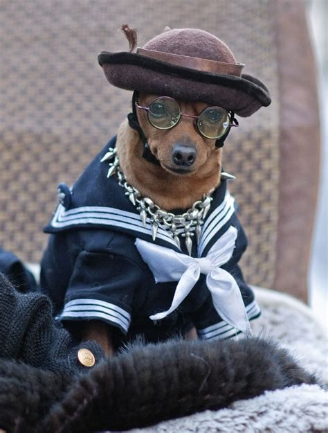 puppies in clothes dogs in clothes confused style goodtoknow