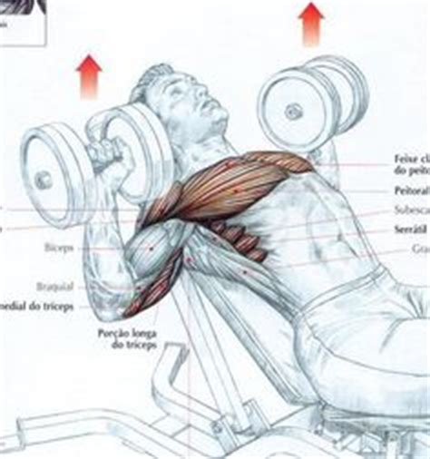 bench press diagram 1000 images about muscle diagrams on pinterest muscles in shoulder proper squat