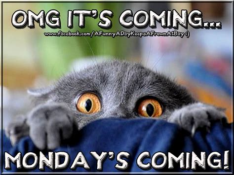 When Monday Was mondays coming inspiration mondays humor