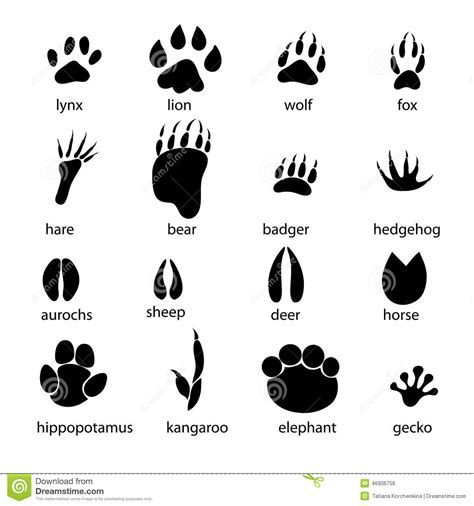 printable animal footprints set different animal tracks graphic footprints white