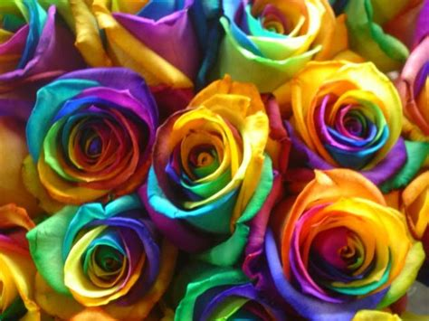 tie dyed roses rainbow explosion
