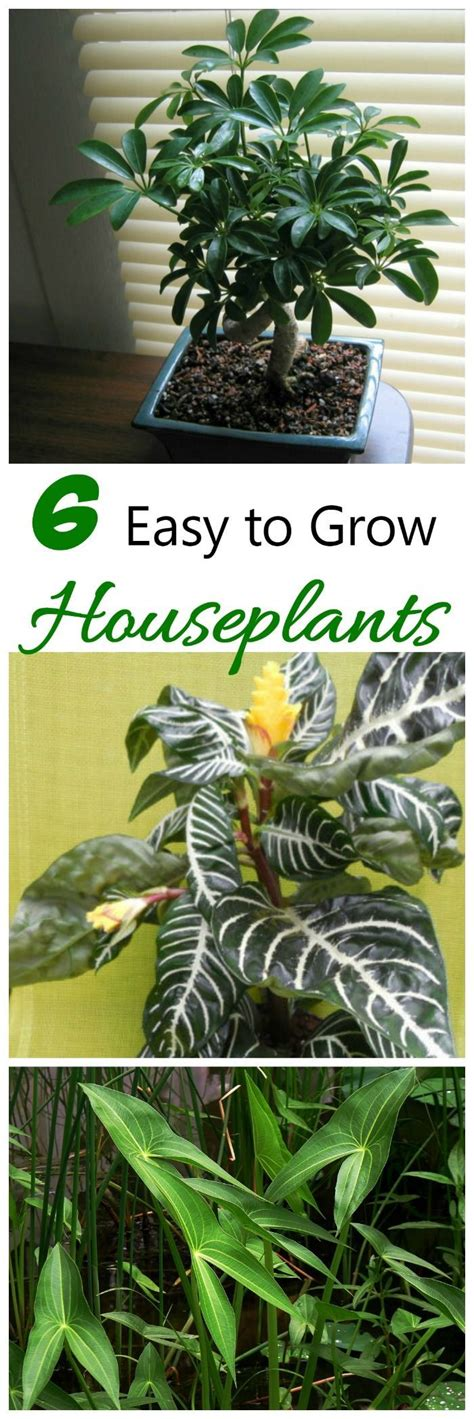 easy plants to grow indoors 25 best ideas about easy house plants on