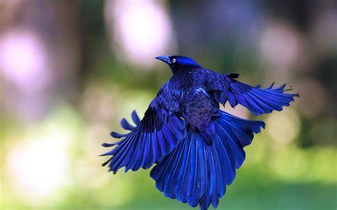 new wallpaper gorgeous blue bird full hd wallpaper new hd wallpapernew