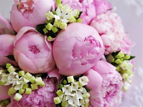 foto fi fiori bouquet di fiori galateo e foto dei pi 249 belli