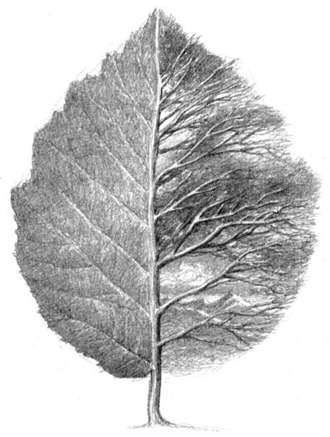 libro leaf by niggle 25 best ideas about leaf drawing on watercolor leaves leaf illustration and leaf