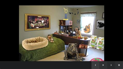 pet room ideas dog room decor android apps on google play