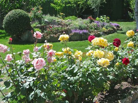 jardines con rosales las 25 mejores ideas sobre rosales cuidados en