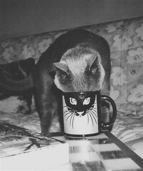 Cat Mug 25 best 25 cat mug ideas on cat cat