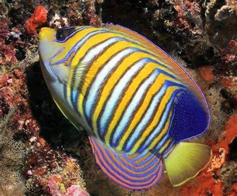 Ikan Hias Laut 48 akuarium air laut tedi rustendi