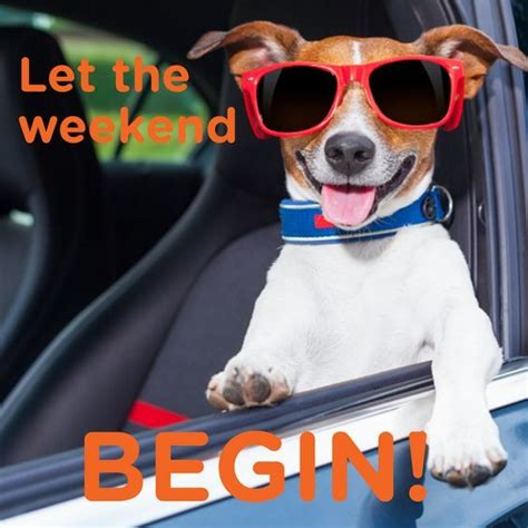 Weekend Dog Meme - let the weekend begin pictures photos and images for