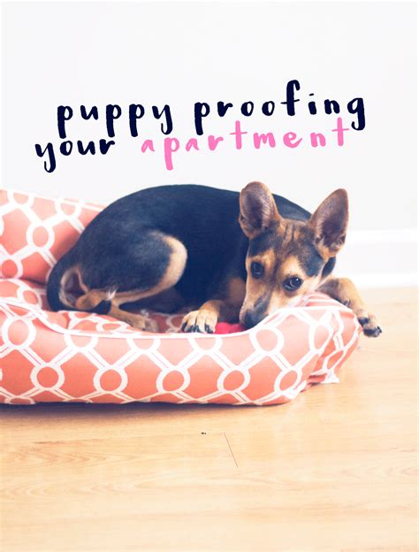 puppy proofing puppy puppy proofing your apartment