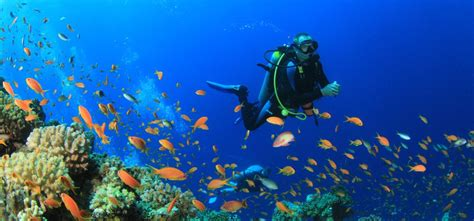 dive scuba how scuba diving can make you feel great
