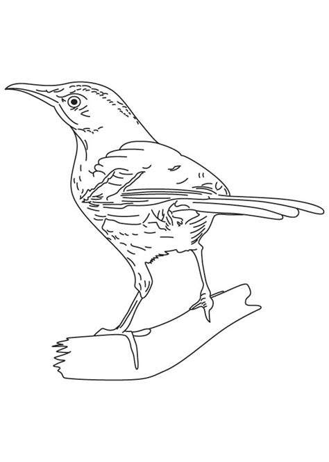 brown thrasher song bird coloring page