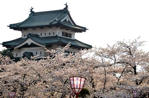 dragon boat festival 2018 austin dragons festivals and cherry blossoms spring 2018