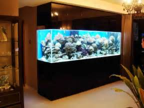 Saltwater Aquarium Fish For Sale   aquarium fish for sale in