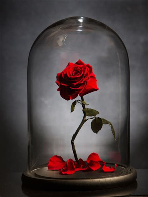 Forever Rose In Glass | forever rose