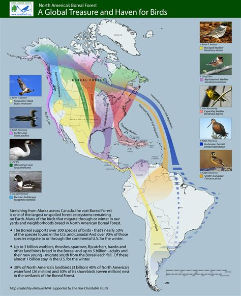 america bird migration map america bird migration map 28 images these 8 migration