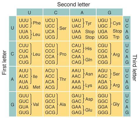 the code genetic code
