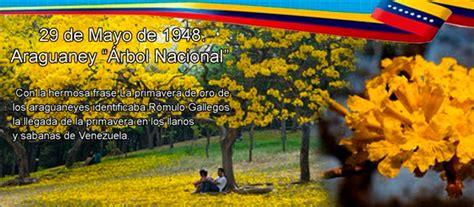 el curioso rbol prodigioso 8494504215 maite araujo olivares d 237 a del 193 rbol araguaney que ilumina en venezuela noticia global