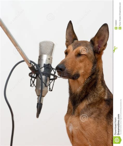 puppy singing singing with closed stock image image 1580691
