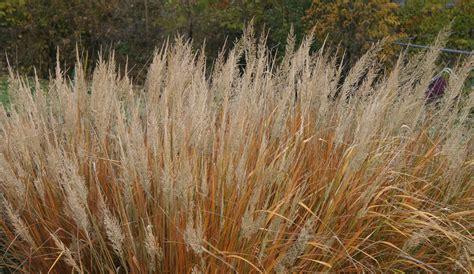 Ankle Korea 1518 natured grasses for the winter garden