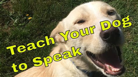 how to your to speak on command how to teach your to speak on command
