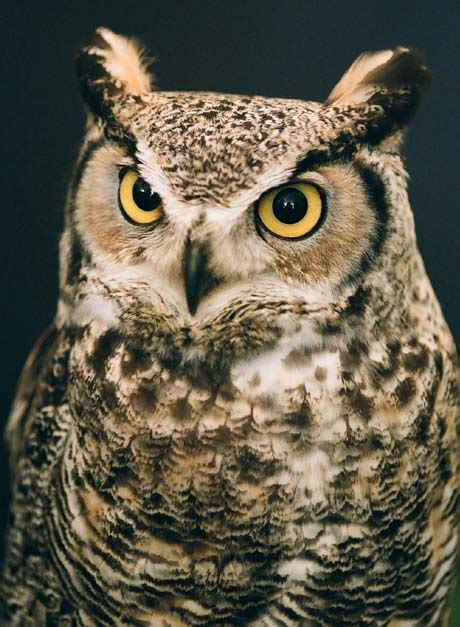 wisconsin owls identification late winter takes a toll on owl population wxow news 19 la crosse wi news weather and sports