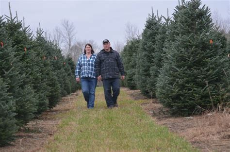 start christmas tree farm western ontario farmers sell their dairy start tree farm in the east farmersforum