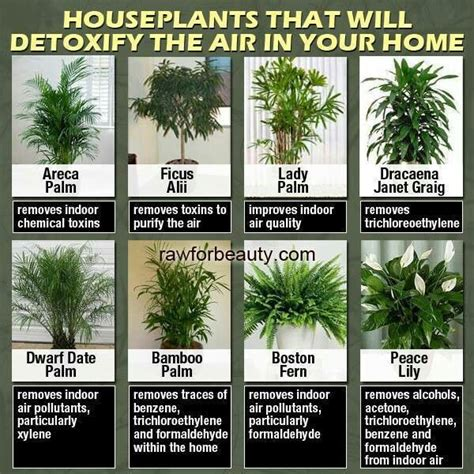 How To Detox Your Apartment by Plants That Clean The Air Home And Living