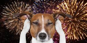 How to keep your dog calm during new year s fireworks