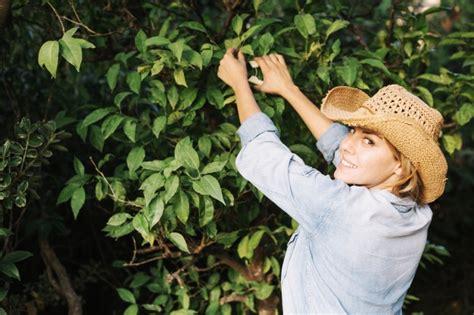 imagenes de mujeres cortando hierba sonriente mujer cortando hojas de 225 rbol descargar fotos