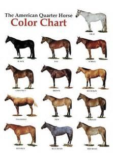 foal color calculator quarter color chart jpg 473 215 639 horses