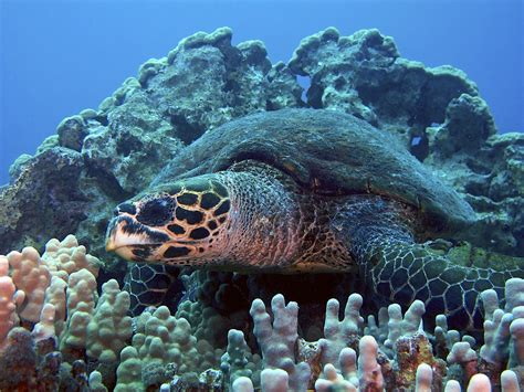 dive holidays guide to philippines scuba diving holidays