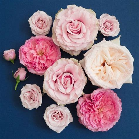 some roses and name on best 25 varieties ideas on all flowers