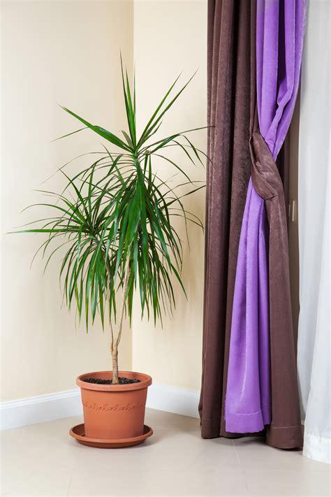 piante da letto 12 piante perfette per la da letto fito