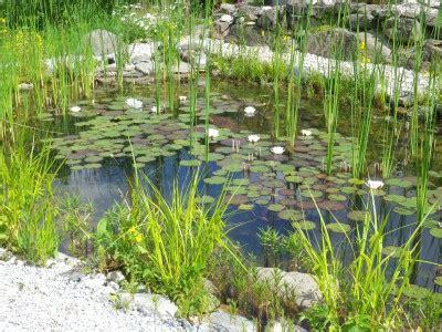 Sichtschutz Im Garten Ideen 2204 by Eolas Garten Teiche Und Wasserspiele F 252 R Ihr Gartenparadies