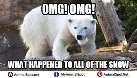 Polar Bear Coke Meme - polar bear memes www imgkid com the image kid has it