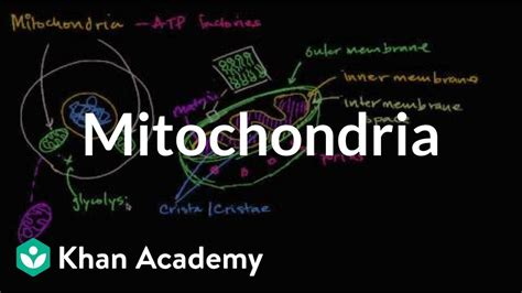mitochondria structure   cell biology khan